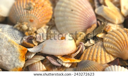 Seashells close-up - stock photo
