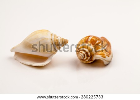 Seashells - colors and texture - stock photo