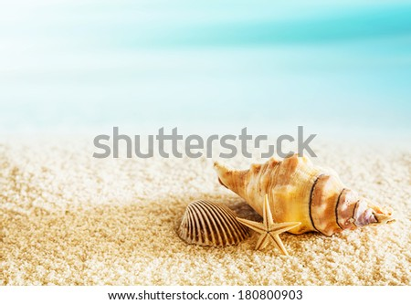 Seashells on a tropical seashore lying on the golden sand with a starfish under the hot summer sun with copyspace - stock photo