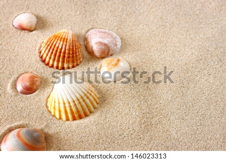 seashells on beach sand background - stock photo