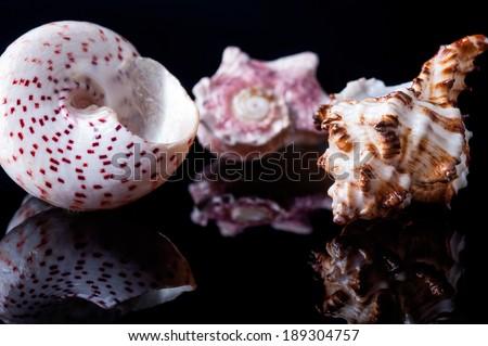 seashells on black - stock photo