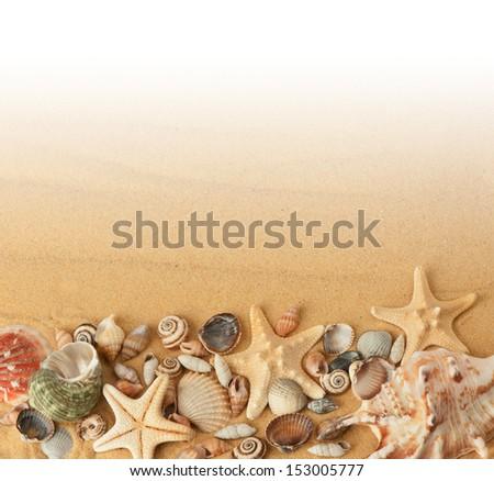 seashells on sand - stock photo