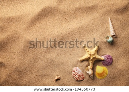 seashells on sand beach - stock photo