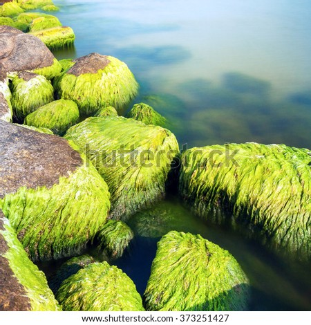 Seashore stones covered with moss and seaweed - stock photo