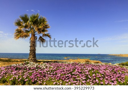 Seaside landscape with palm tree and pink flowers. - stock photo