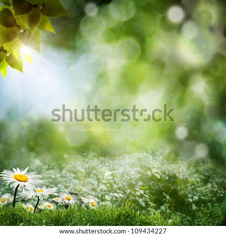 Seasonal natural backgrounds with daisy flowers - stock photo