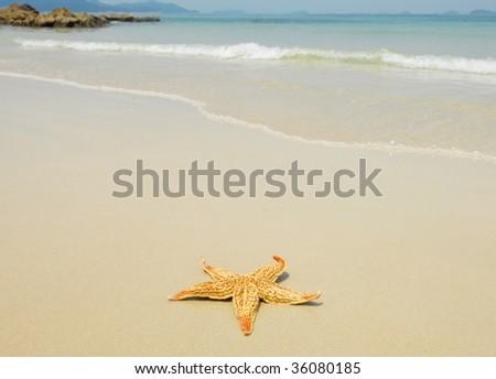seastar sitting on beach - stock photo