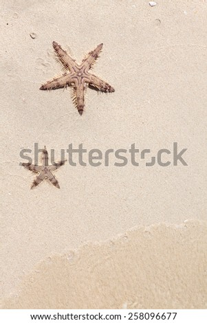 Seastars on the sand of the sea beach - stock photo