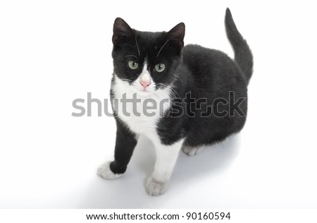 seated cute black and white kitten looking at the camera - stock photo
