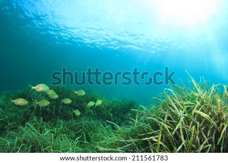 Seaweed fish and sun underwater - stock photo