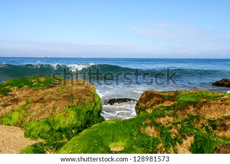 seaweed on the stones on the coast of Mediterranean sea in Israel - stock photo