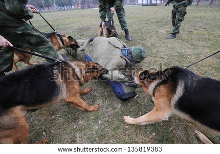 security dogs - stock photo