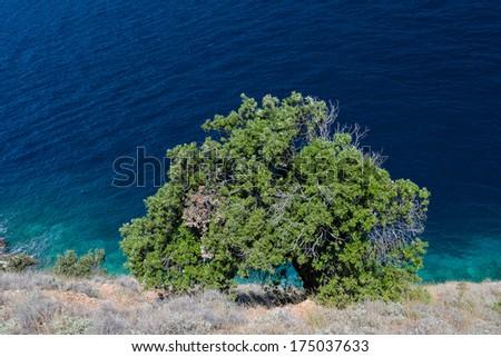 See seaside tree - stock photo