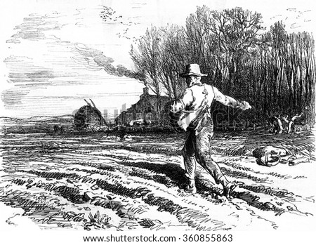 Seed on the fly, vintage engraved illustration. Magasin Pittoresque 1857. - stock photo