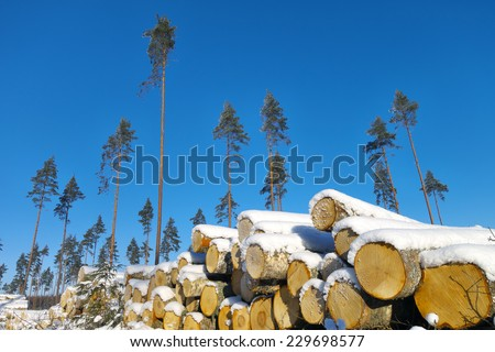 Seed pines on lumbering pace with harvested timber pile in foreground. - stock photo