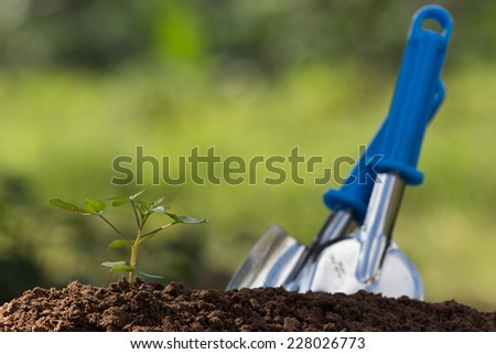 seed roots of young plant and light - stock photo
