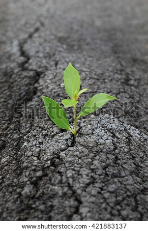 Seed to grow through the cracks of the asphalt road in the concept of trying to grow, though it will be difficult. - stock photo