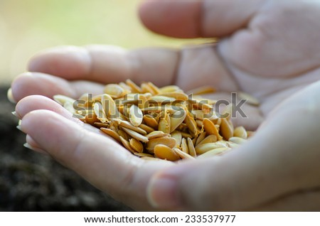 Seeding,Seedling,Agriculture,Close up seed on hand - stock photo