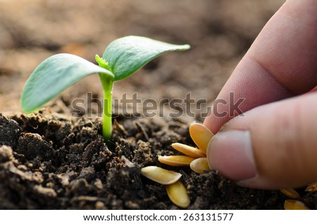 Seeding,Seedling,Soil,Agriculture,Close up Young plant growing with hand planting - stock photo