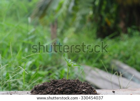 Seedling green plant isolated on nature background - stock photo