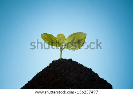 Seedling green plant on a blue background - stock photo