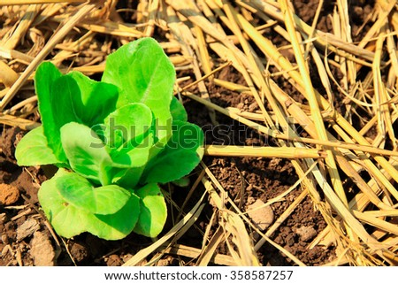 Seedling green plant surface top view textured background - stock photo