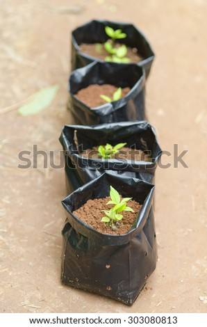 Seedling grow, nature park outdoor - stock photo