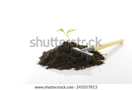 seedling growing and  Rake on white - stock photo