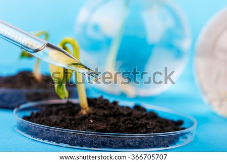Seedling growing in petri dish in biotechnological  laboratory.  laboratory for biotechnological testing of sprouts.  - stock photo