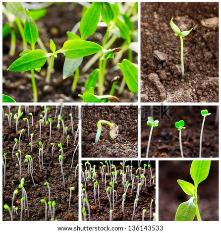 Seedling growing on soil, collage, close-up - stock photo