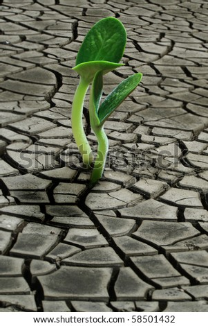 Seedling growing trough dry soil cracks - stock photo