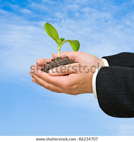 seedling in hands - stock photo