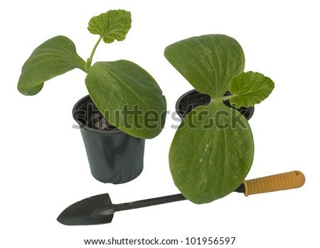 Seedling of vegetable plants with a garden trowel on white background - stock photo