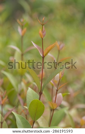 Seedling Plant growth - stock photo