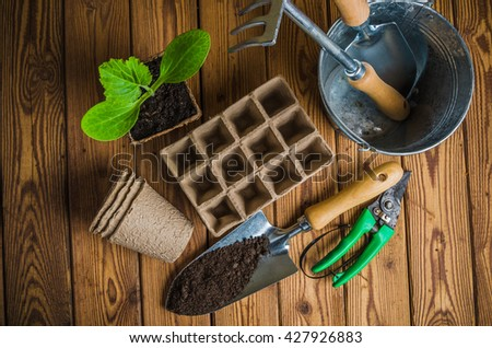 Seedlings and garden tools on a wooden surface, top view - stock photo