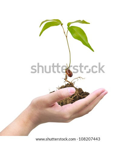 Seedlings grown from seed on women hand - stock photo