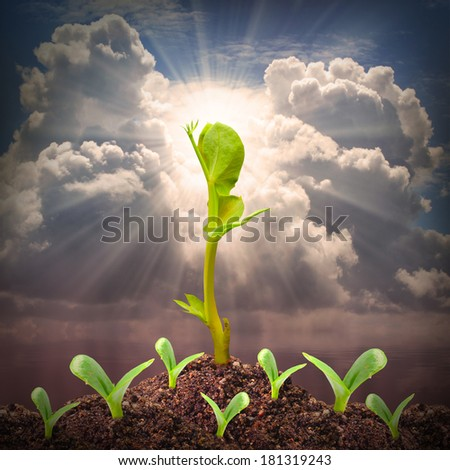 Seedlings growth. Competition and success metaphor. - stock photo