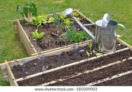 seedlings in a small garden with metal watering can  - stock photo
