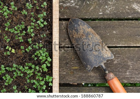 seedlings in a wooden box and gardening tool - stock photo
