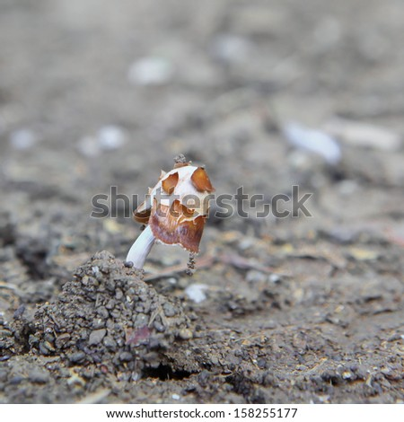 Seedlings of mushrooms on the ground - stock photo