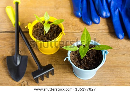 Seedlings of young plants and garden tools on a wooden surface (background). Gardening and spring concept. Copy space. - stock photo