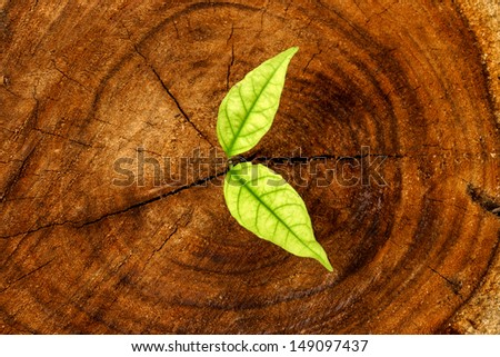 Seedlings on a tree stump. - stock photo