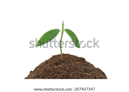 Seedlings on the ground background on white. - stock photo