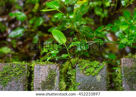Seedlings sprouting from old planks, Focus to sapling. - stock photo