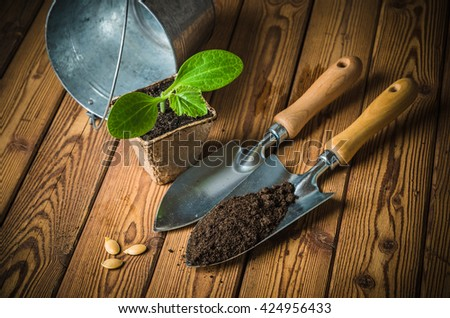 Seedlings zucchini and garden tools on a wooden surface - stock photo