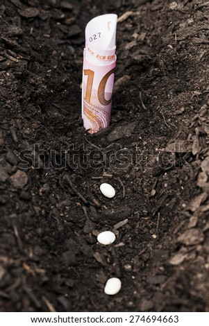 Seeds and money plant Seeds and money plant Investment and money growth concept - stock photo