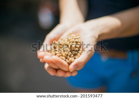 seeds in the hands of - stock photo