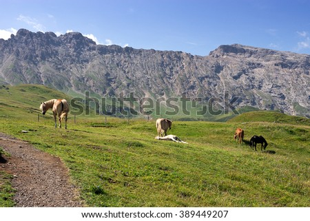 Seiser Alm meadow - Horses grazing in pasture land, Italy.  Alpe di Siusi is the largest high altitude Alpine meadow in Europe   - stock photo