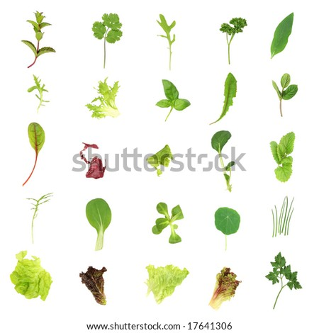 Selection of fresh salad lettuce and herb leaves set over white background. - stock photo