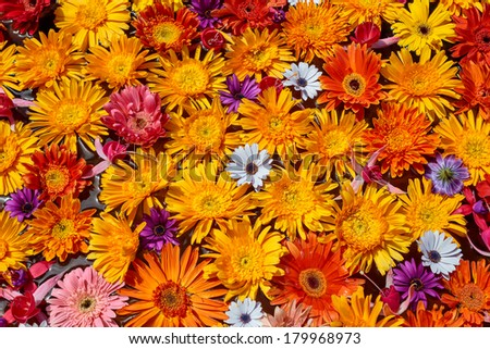 Selection of Various colorful Flowers as a background - stock photo